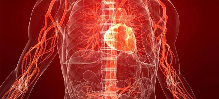 Améliorer le flux sanguin et la circulation lymphatique